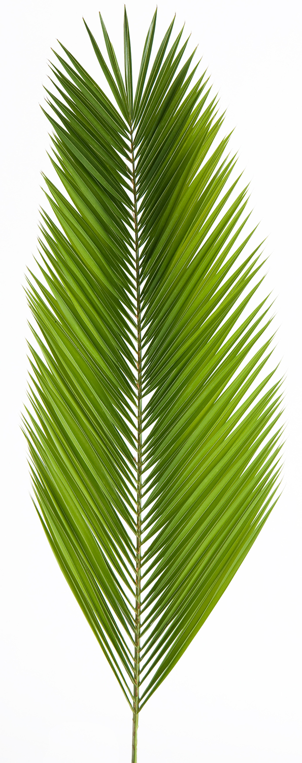 Palm Altar Decor | Date Palm | bag of 4