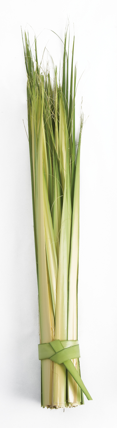 Palm Sunday Palm Strips | Short | bag of 100
